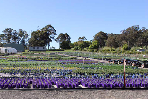 IoT Agricultural Specialist Helps Australian Nursery Become More Profitable