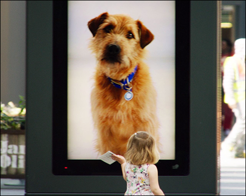 Animal Shelter Uses RFID to Fetch Mall Shoppers' Attention