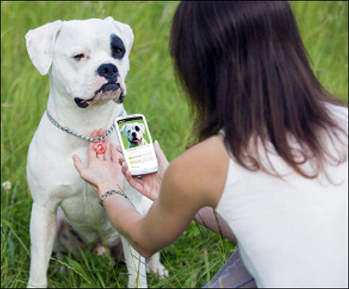 Best NFC Deployment: NFC Tags on Collars Identify Lost Pets