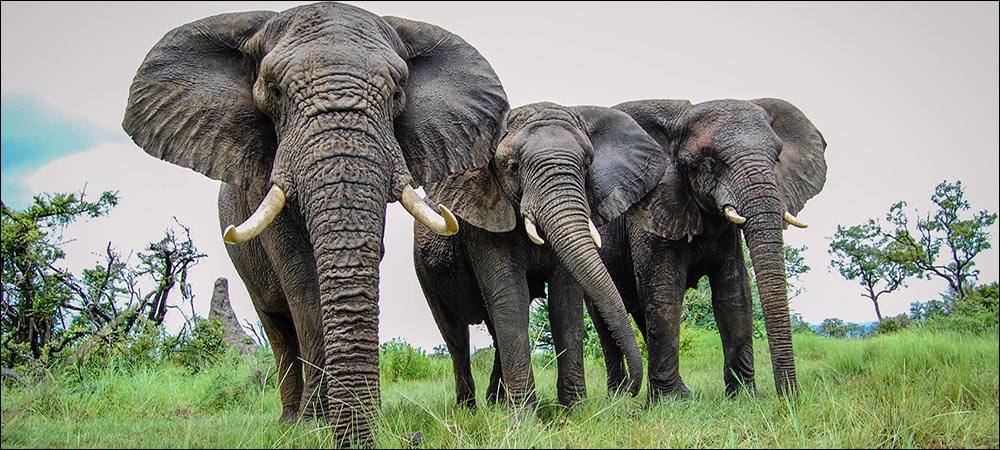 Developers Compete to Help Protect Elephants with IoT